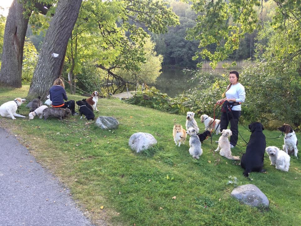 Promenad med hundarna på Lillefots Hundcenter