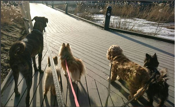 Hundar på hunddagis